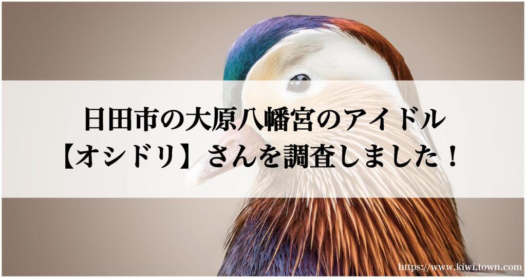 日田市の大原八幡宮のアイドル【オシドリ】さんを調査しました!